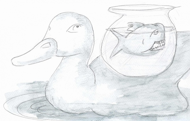 035-duck-back