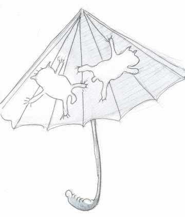 070-raining-cats-dogs