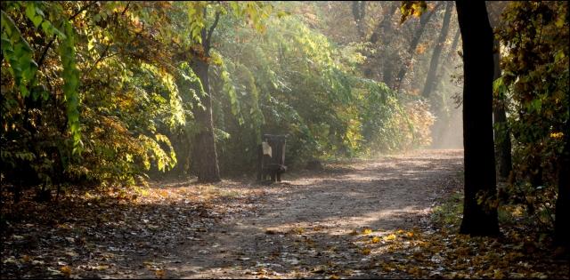 Őszi erdő paddal