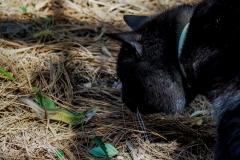 Gizi macska és a gyík