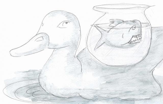 035-duck-back